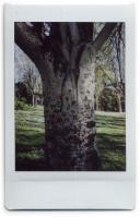 http://nfcallaway.com/files/gimgs/th-10_Polaroid_Alamo2-web.jpg